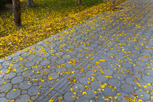 Yellow Tabebuia On The Ground