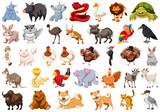 Fototapeta Fototapety na ścianę do pokoju dziecięcego - Set of wild animal