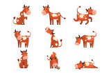 Fototapeta Fototapety na ścianę do pokoju dziecięcego - Brown spotted cow set, farm animal character in various poses vector Illustrations on a white background