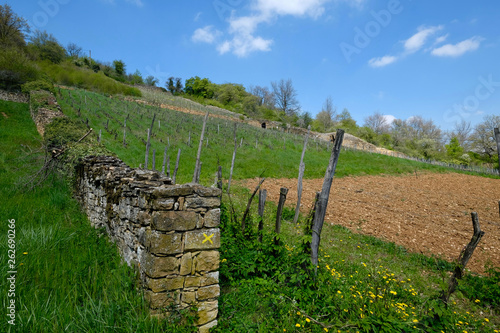 Fotografie, Obraz  campagne vignes lyonnais
