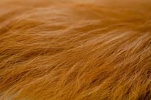 Dog Fur Texture, Brown Fur Dog