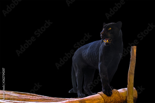 Photo Stands Panther Black Panther stands on a wood on a black background