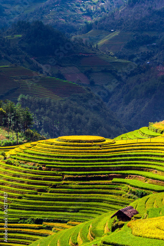 La pose en embrasure Les champs de riz Rice fields on terrace in rainy season at Mu Cang Chai, Yen Bai,