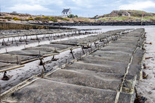 Oyster Farming And Oyster Traps, Floating Mesh Bags By Carrickfinn In County Donegal, Ireland
