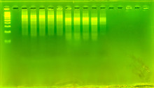 The Science DNA Analysis By PC...