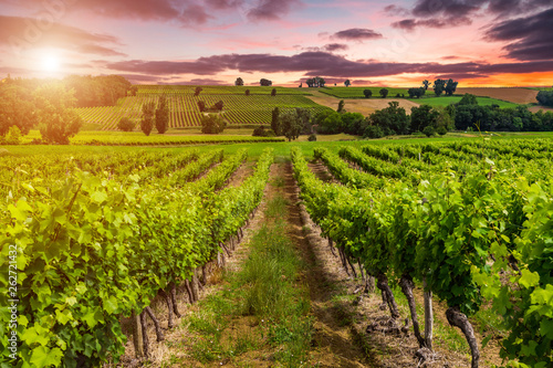 La pose en embrasure Vignoble Beautiful vineyard at sunset. Travel around France, Bordeaux