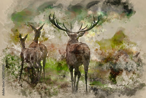 Watercolour painting of Beautiful Family group herd of red deer stag cervus elaphus during rut season in forest landscape during Autumn Fall