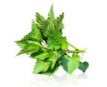 Urtica Dioica, Common Nettle, ...