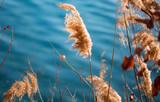 Fototapeta Do pokoju - roseau lac eau automne herbe