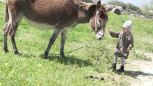 Beautiful Little Girl Feeding A Donkey On A Farm. A Donkey Stands In The Midst Of A Green Field, Baby Gives Him Food And Strokes A Cute Animal In The Face