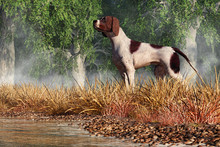 An English Pointer Stands In T...