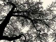 Branches Of Deciduous Tree In ...