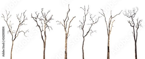 Fotografia, Obraz Collection of dead trees silhouettes isolated on white background