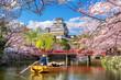 Leinwanddruck Bild - Himeji castle and cherry blossoms in spring, Japan.