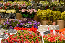 Flowers Shop In Amsterdam, Holland