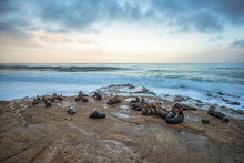 Group Of Seals On The La Jolla, California Coast.
