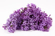 Lilac flowers isolated on a white background