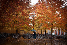 Side View Of Person With Umbrella Walking On Street Near Trees With Yellow Leaves And Bicycle Parking In London, United Kingdom
