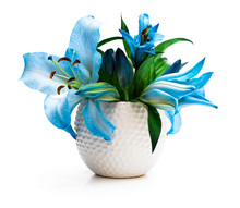 Blue Lily Flowers Bouquet In White Pot Isolated