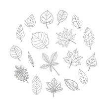 Vector Set Of Colored Black Leaves Isolated On White Background. Monochrome Pack Of Birch, Maple, Oak, Rowan, Chestnut, Hazel, Linden, Alder, Aspen, Elm, Poplar, Willow, Walnut, Ash Leaves.