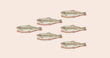 Raw Fish/salmon
