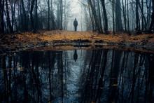 Mysterious Dark Autumn Forest ...