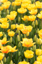Bright Yellow Flowers Growing