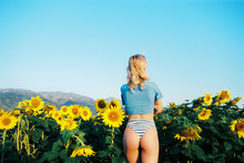 Sunflowers Field With Joy And Happiness