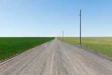 Spring Crops Of Wheat Grass And Alfalfa Bordering Rural Dirt Road