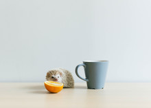 Good Morning ? Hedgehog With Cup, Orange And Cuteness