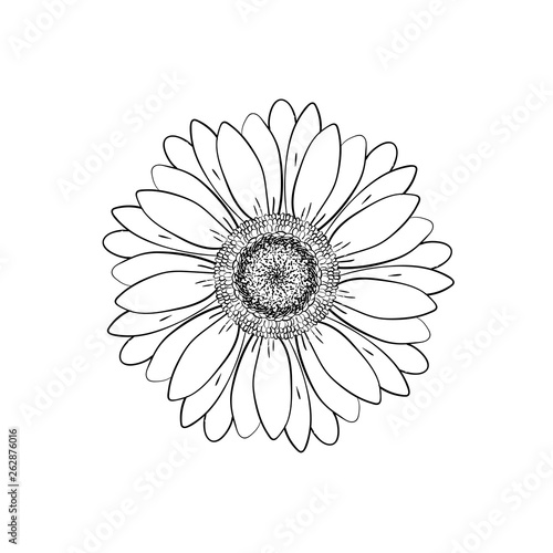 Open Petals Daisy Head Flower Floral Botany Drawings Black