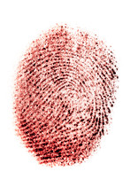 Real Fingerprint In Red Color On White Background, Bloody Thumbprint, Macro