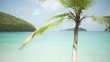 Background Plate of Large palm tree in front of a blue Caribbean ocean