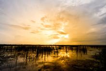 Landscape Of Wetland
