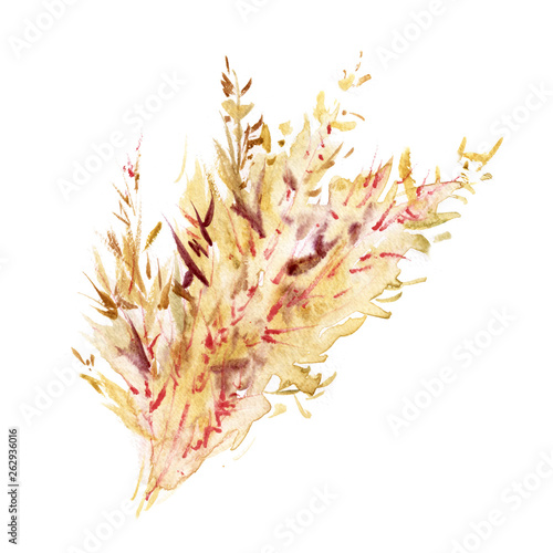 Poster Coral reefs Watercolor spikelets of rye product illustration. Painted isolated natural organic fresh eco food on white background