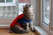 Adorable Gray Kitty In Costume...