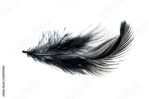 obraz dibond Close-up of Black feather isolated on white