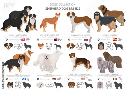 Fotografie, Obraz  Shepherd and herding dogs collection isolated on white