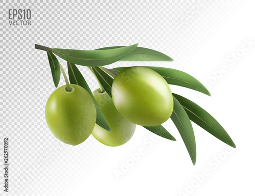Fototapeta Green olive branch isolated on transparent background as package design composition. Photo-realistic vector, 3d obraz