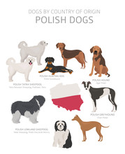 Dogs By Country Of Origin. Polish Dog Breeds. Shepherds, Hunting, Herding, Toy, Working And Service Dogs  Set