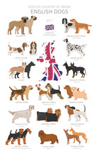 Dogs By Country Of Origin. Eng...