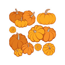 Pumpkin. Pumpkins Hand Drawn Vector Illustrations Set. Pumpkin Sketch Drawing.