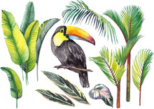 Tropical Set With A Toucan, Ba...