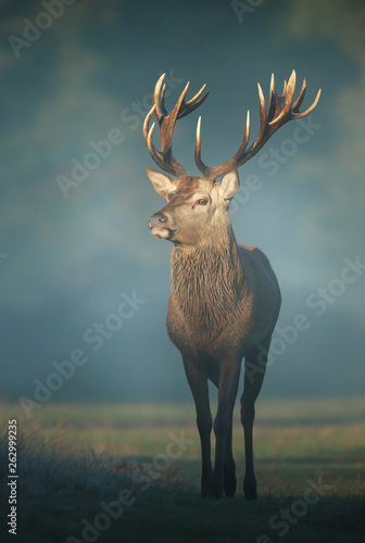 Red deer stag on a misty autumn morning Wall mural