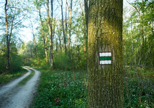 Tree Trunk With Green Tourist Sign In The Forest. Footpath With A Curve On A Spring Day.