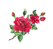 Red Rose Branch With Buds And Leaves. Watercolor Art