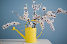 Blossom Branches In Yellow Watering Can