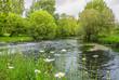 Flusslandschaft Blumen und Feuchtwiese - River landscape flowers and wet meadows