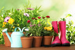 Potted blooming flowers and gardening equipment on wooden table outdoors