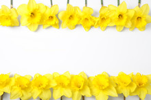 Composition With Daffodils And Space For Text On White Background, Top View. Fresh Spring Flowers